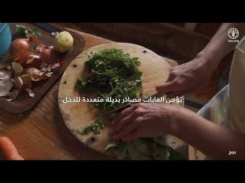بمناسبة اليوم الدولي للغابات، مكتب منظمة الأغذية والزراعة (فاو) في لبنان يطلق فيديو قصير حول أهمية الغابات السليمة لمجتمع حيوي